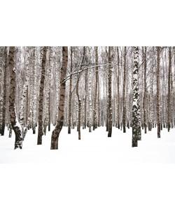 Tableau 120x80 Forêt